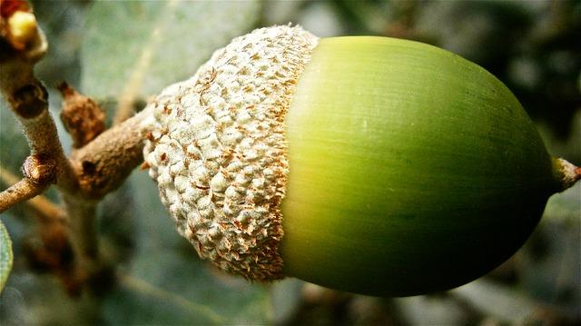 acorns-personal-finance-app