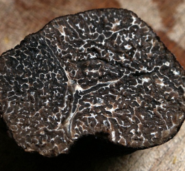 truffles--foodie-revolution