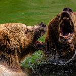 Bears are wrong about REITS