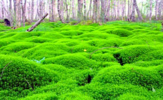 Is biodiversity a hidden investment risk?