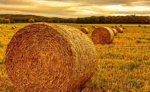 WisdomTree: Tax-loss harvesting explained